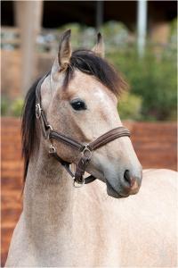 Photo cheval a vendre PARADOR DE LA GESSE